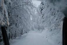 Jakuszyce 14 stycznia. Fot: Bieg Piasów